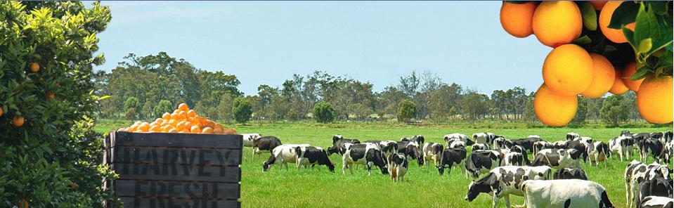Harvey Fresh Milk Australia